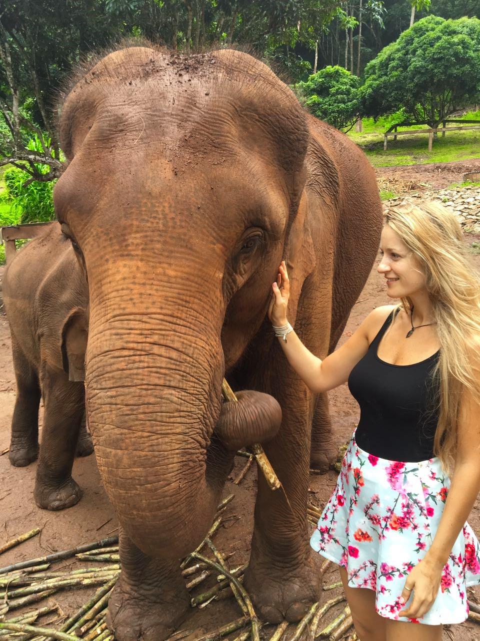 בחוות הפילים פאטארה בצ'אנגמאי
