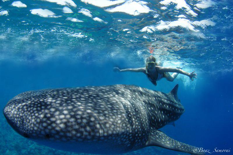 אני והכריש לוויתן זורמים ביחד בכחול המלדיבי