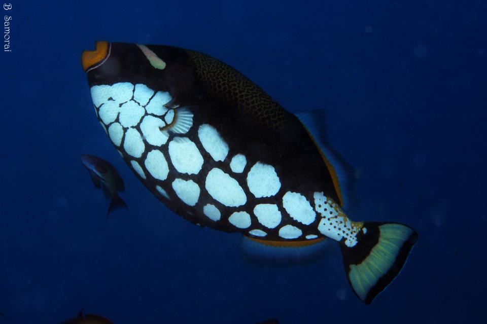 מלדיבים, הצבעים השולטים מתחת למים, היו של הדגים המרהיבים
