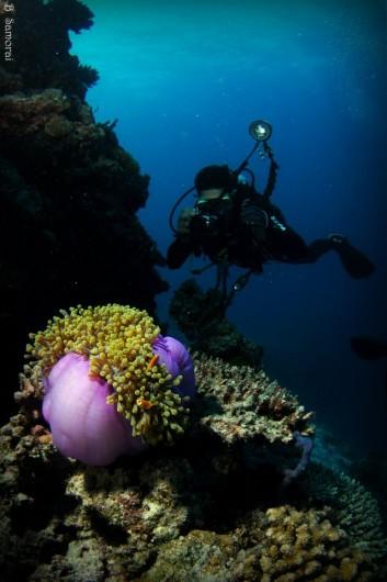 בועז מצלם את ירון שמצלם את שושנת הים ואת נמו :)