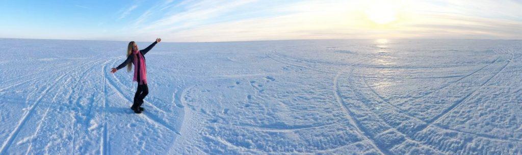 האסקי סיבירי, רגע לפני רכיבה על מזחלות השלג. לפלנד 2016