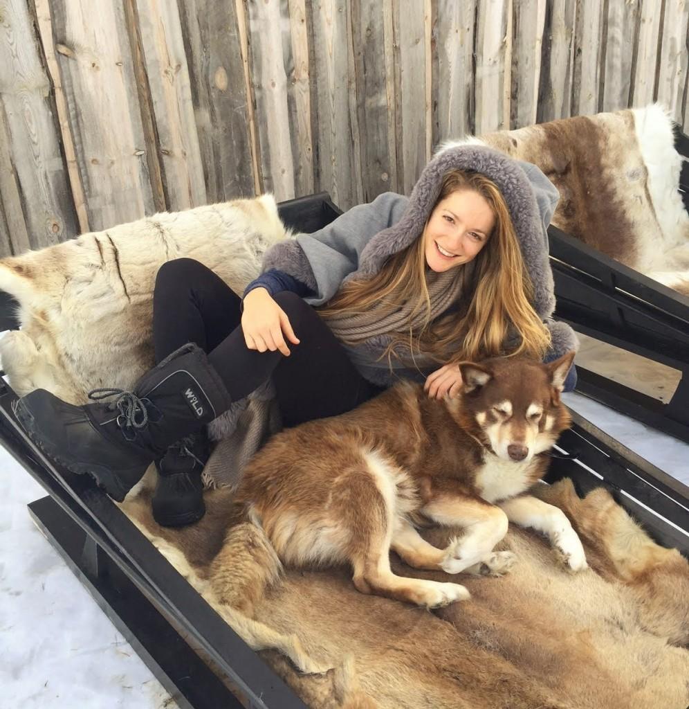 כלבים בלפלנד מזחלות שלג