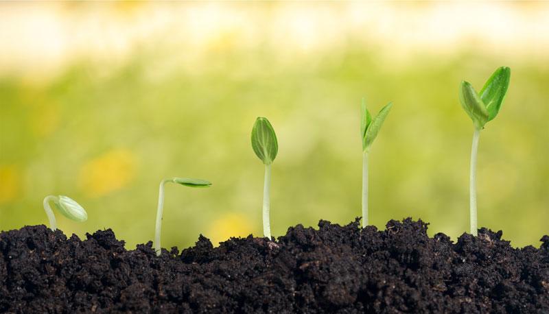 זורעים הרבה זרעים – בסוף משהו יתפס